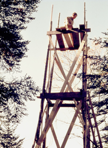 image of scaffolding for high nesting birds.